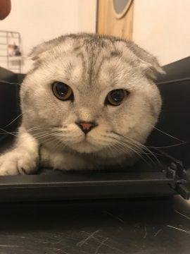 חתלתלת- panleukopenia בחתולים- וטרינר נייד, וטרינר עד הבית, וטרינר ביקור בית