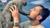 וטרינר ביקור בית-גזזת בחתולים