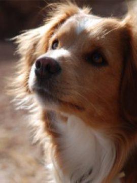 DOG AND CAT EUTHANASIA- המתת חסד בכלבים וחתולים