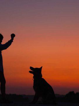 היפוך קיבה בכלבים- GDV-וטרינר ביקור בית קיסריה עמק חפר כפר ויתקין, וטרינר עד הבית עמק חפר קיסריה כפר ויתקין